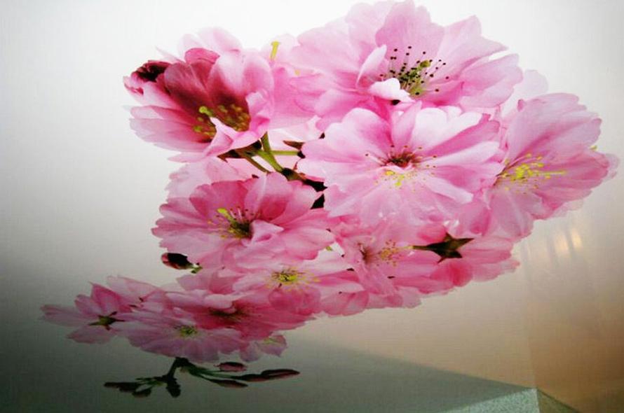 фотопечать цветы на натяжном потолке