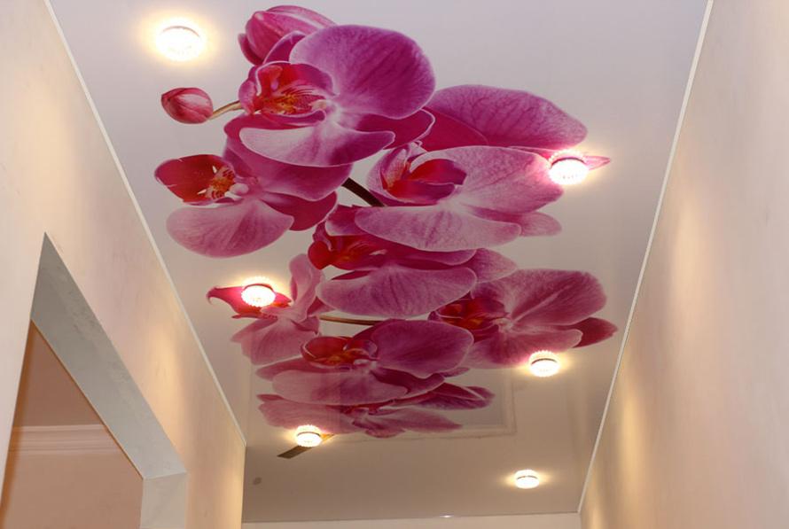 второе место натяжные потолки с фотопечатью цветы между грядками