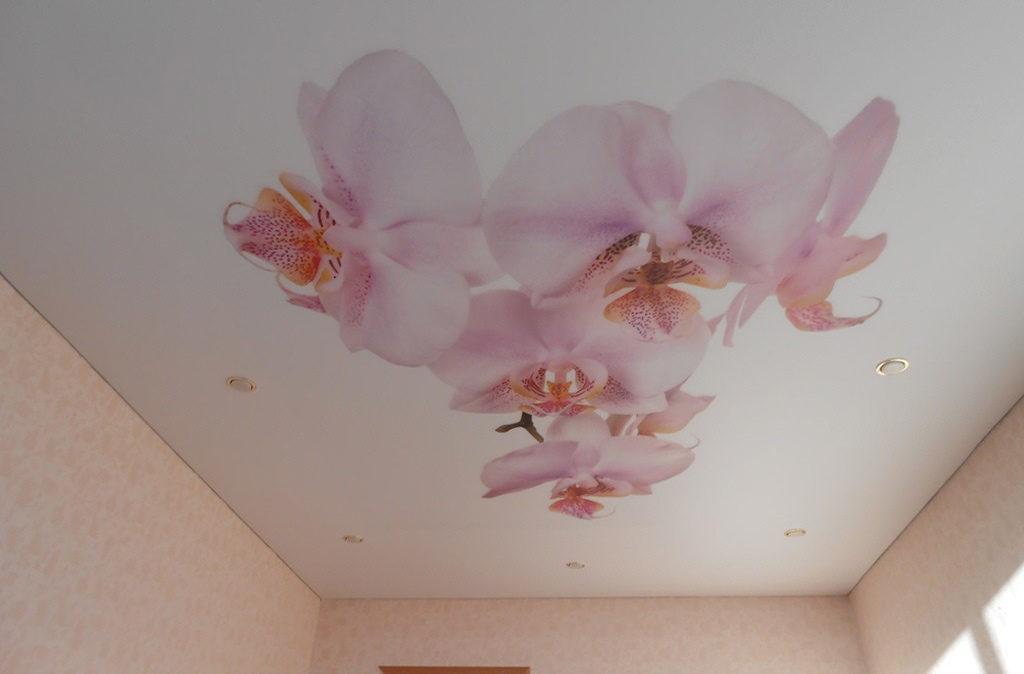натяжной потолок фотопечать цветы орхидеи