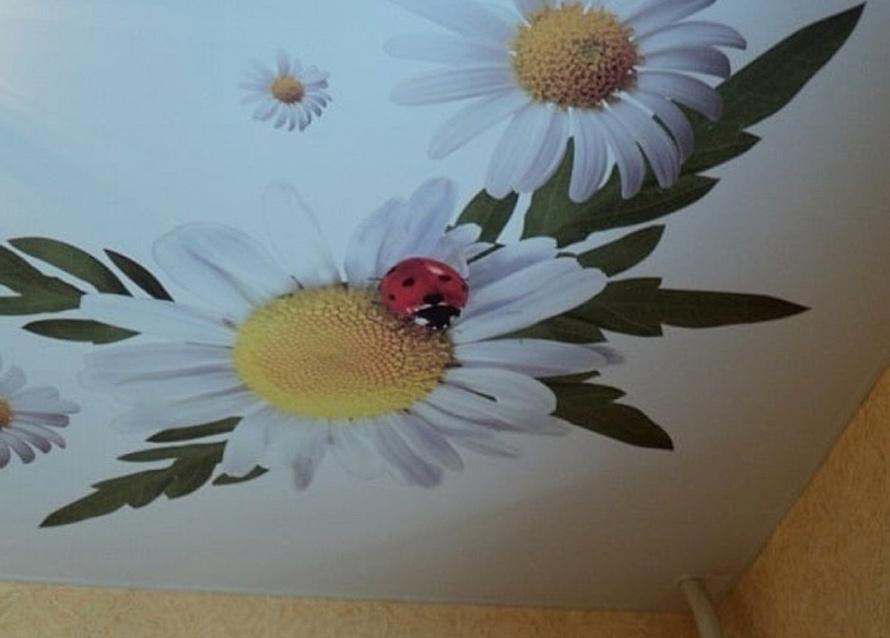 Натяжные потолки Дмитров - Фотопечать цветы на натяжных потолках 20 примеров. 20